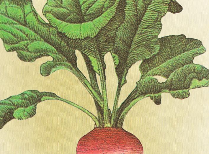 Plant A Radish